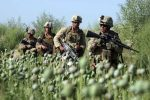 Drugs in Afghanistan us